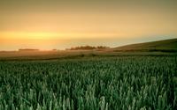 Green barley field wallpaper 1920x1200 jpg