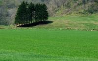 Green field [4] wallpaper 2560x1600 jpg