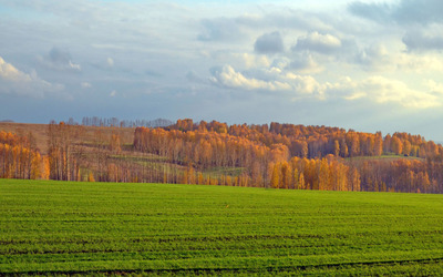Green field by the autumn forest wallpaper