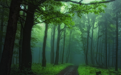 Green foggy forest wallpaper