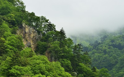 Green foggy forest in the mountains wallpaper