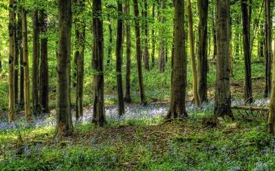 Green forest [3] wallpaper