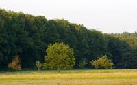 Green forest [5] wallpaper 1920x1080 jpg