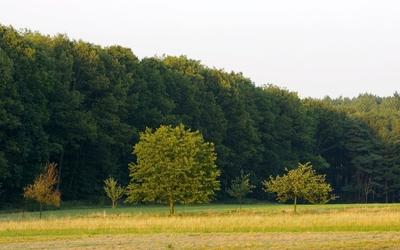 Green forest [5] wallpaper