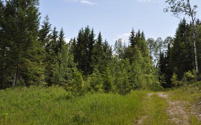 Green forest [6] wallpaper