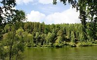Green forest by the river wallpaper 2560x1600 jpg