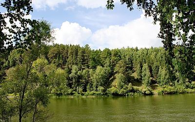 Green forest by the river wallpaper