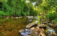 Green forest by the rocky river wallpaper 2560x1600 jpg