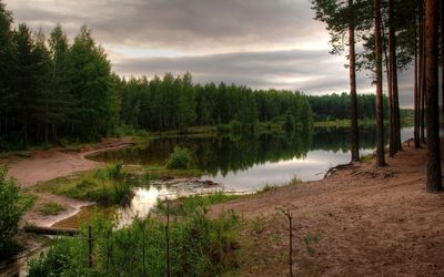 Green forest guarding the lake Wallpaper