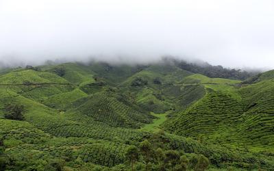 Green hills hiding in the fog wallpaper