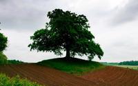 Green lonesome tree wallpaper 1920x1200 jpg
