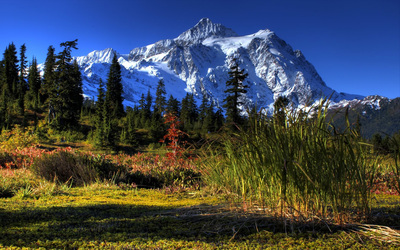 Green nature by the snowy peak wallpaper