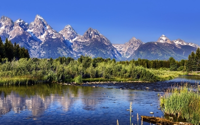 Green nature in Grand Teton National Park wallpaper