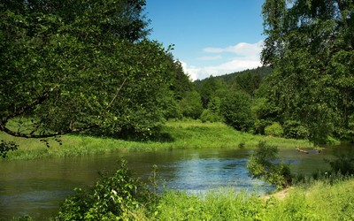 Green nature on a summer day by the river wallpaper
