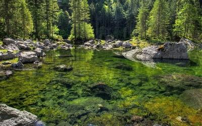 Green rocks on the bottom of the lake wallpaper