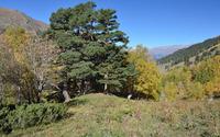 Green trees between the autumn trees wallpaper 3840x2160 jpg
