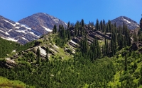 Green trees between the rocky peaks wallpaper 2560x1600 jpg