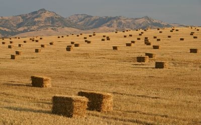 Hay bales [3] wallpaper