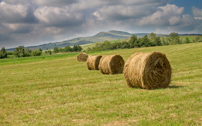 Hay bales on the meadow wallpaper