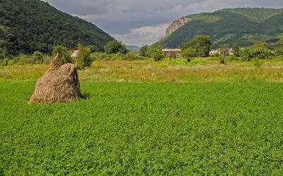 Haystack in the clover field Wallpaper