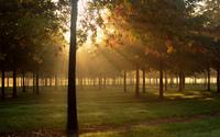 Heavenly sun light above the forest wallpaper 2560x1600 jpg