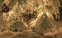 Heavy snow over the lights in the pine tree wallpaper 1920x1080 jpg