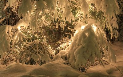 Heavy snow over the lights in the pine tree wallpaper