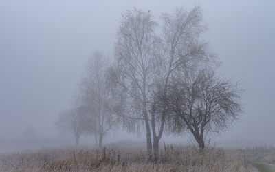 Icy foggy trees wallpaper