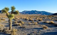 Joshua Tree National Park wallpaper 1920x1200 jpg