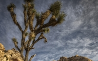 Joshua Tree National Park [8] wallpaper 1920x1080 jpg