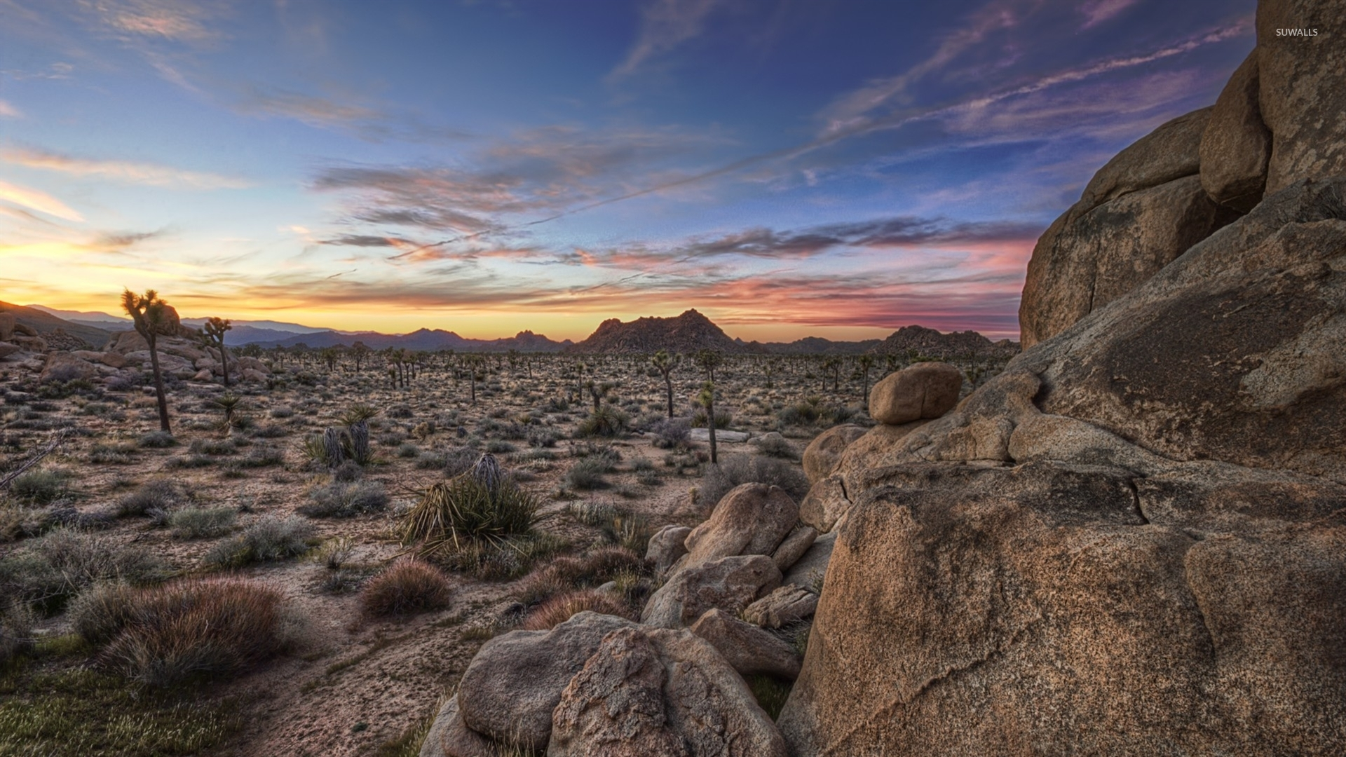joshua tree national park [7] wallpaper - nature wallpapers - #45082