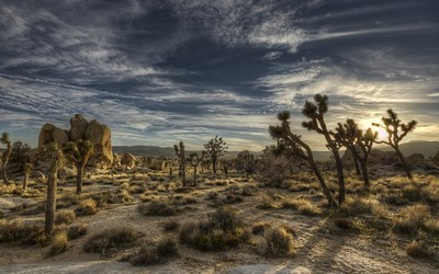 Joshua Tree National Park [2] wallpaper