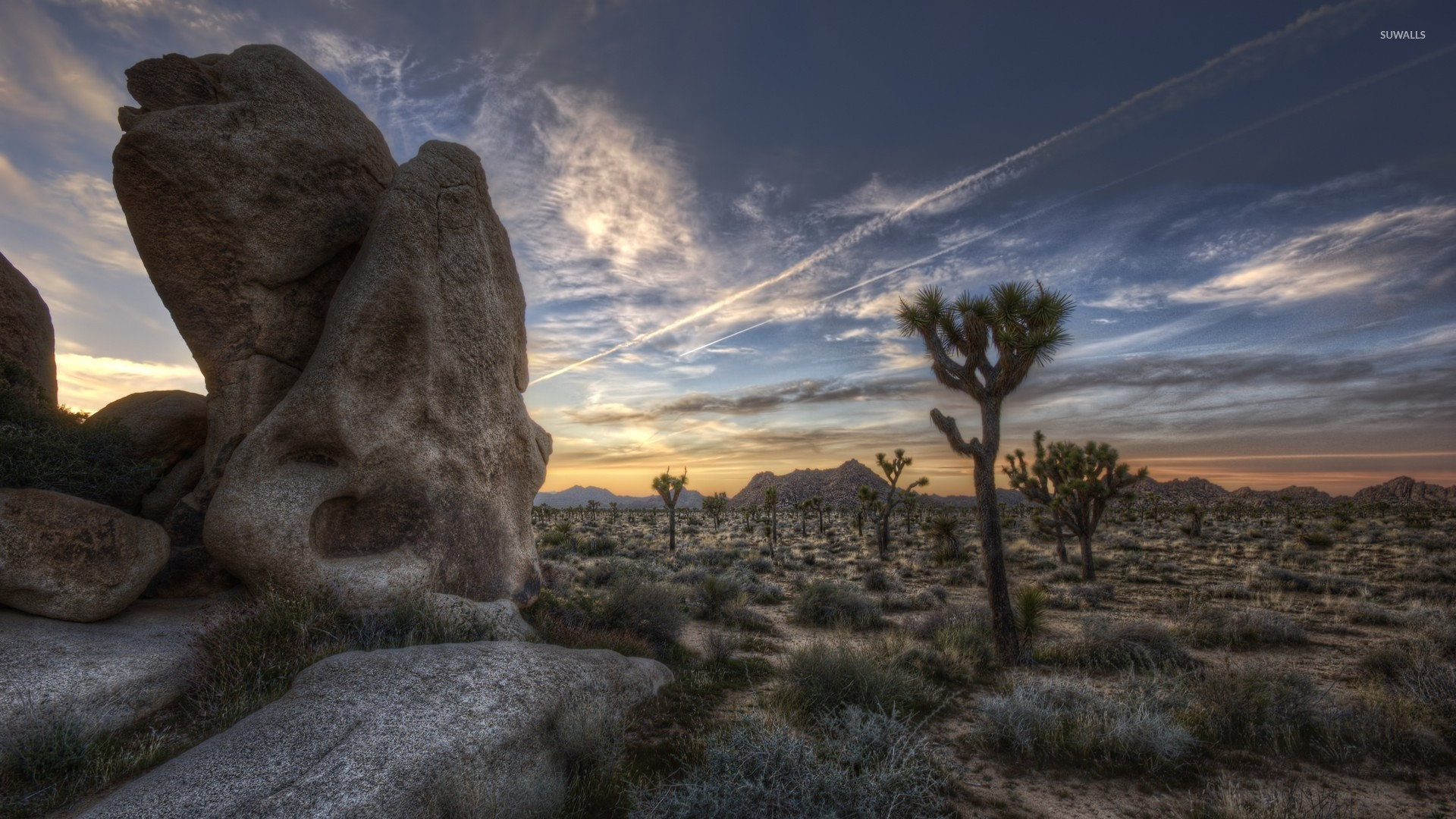 joshua tree national park [4] wallpaper - nature wallpapers - #45121