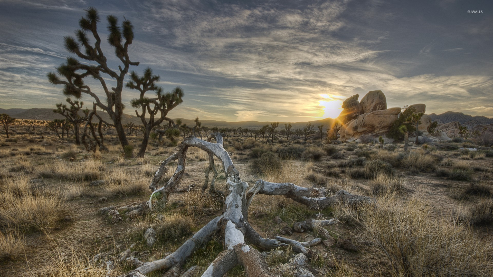 joshua tree national park [3] wallpaper - nature wallpapers - #45130