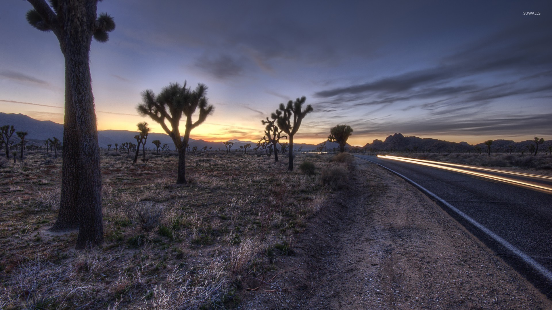 joshua tree national park [5] wallpaper - nature wallpapers - #45133