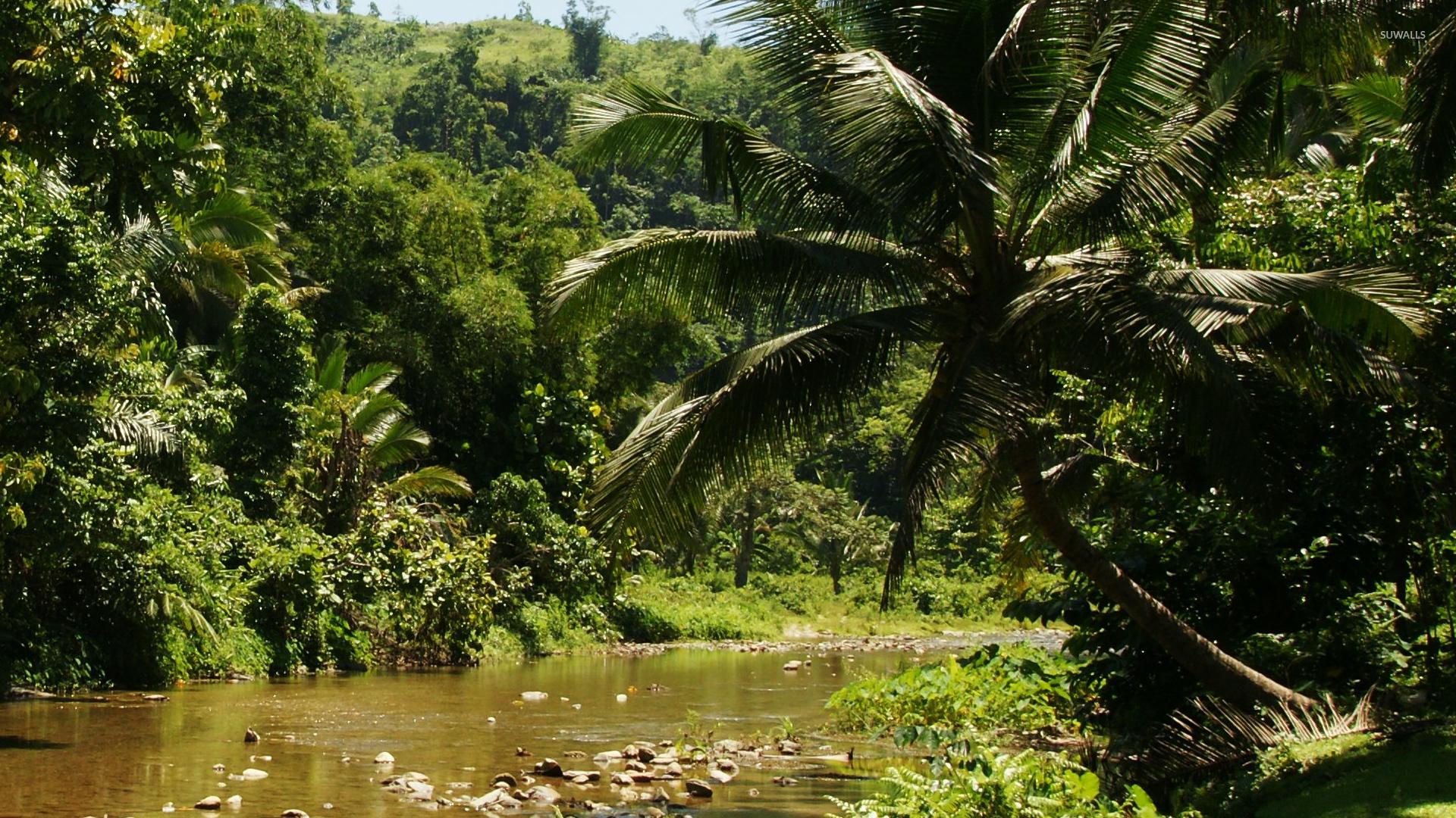 download jungle 1920x1080 1920x1080 - photo #2