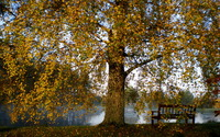 Lake bench aside the autumn tree wallpaper 1920x1200 jpg