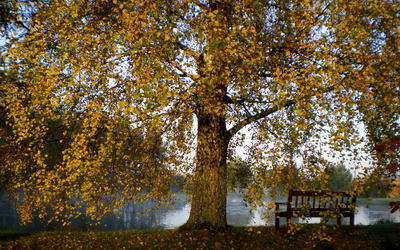 Lake bench aside the autumn tree wallpaper