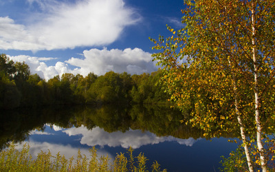 Lake bordered by the forest wallpaper