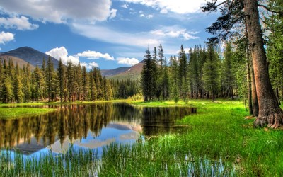 Lake in the forest wallpaper