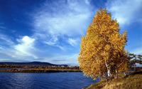 Lakeside autumn tree wallpaper 2560x1600 jpg