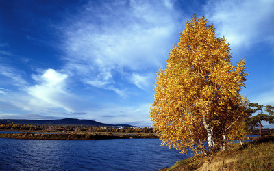 Lakeside autumn tree wallpaper