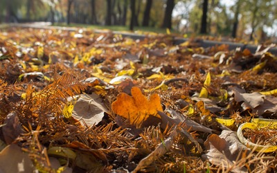 Leaf carpet in the park wallpaper