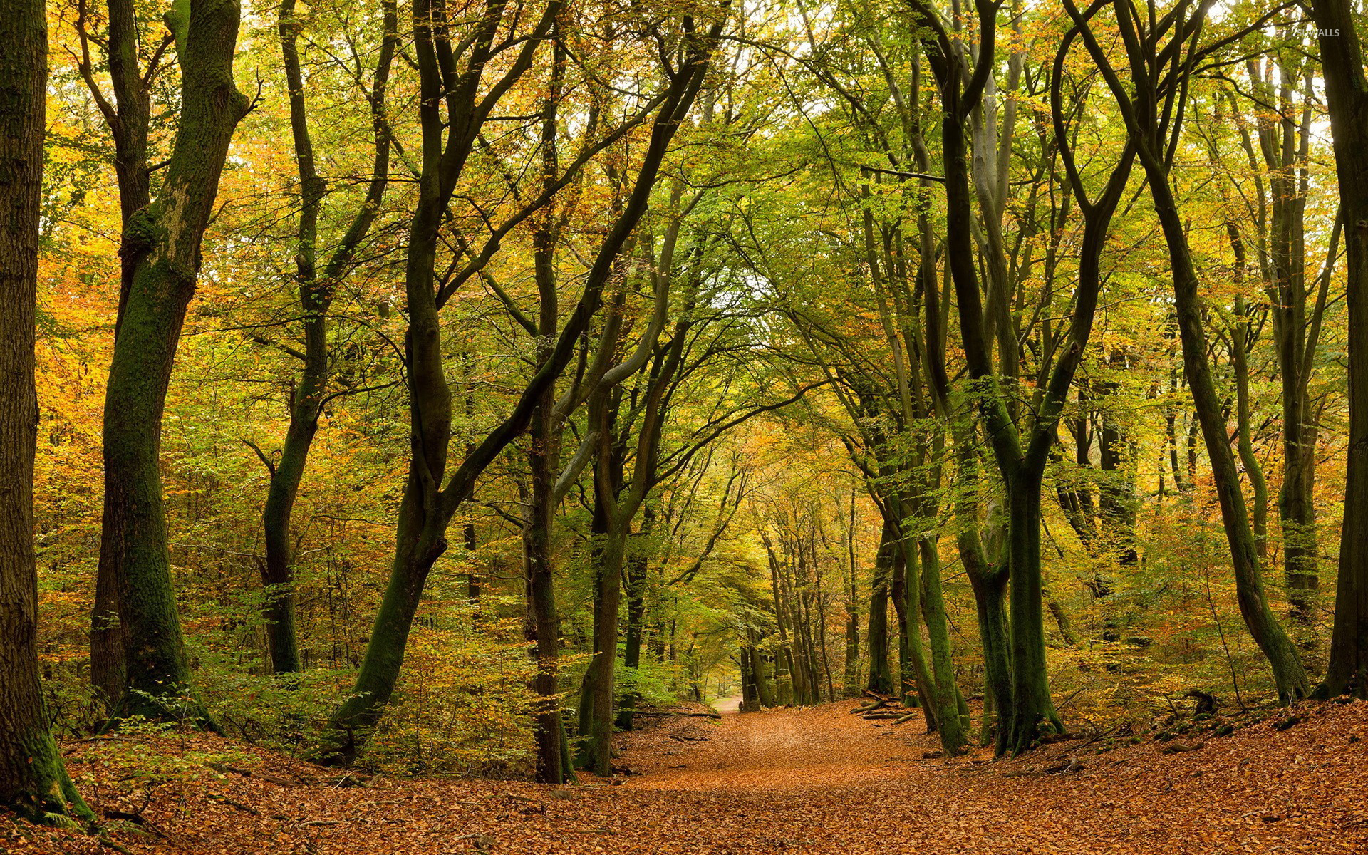 Leaves path through the autumn forest wallpaper  Nature wallpapers  38586