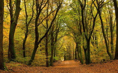 Leaves path through the autumn forest wallpaper