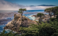 Lone Cypress wallpaper 1920x1200 jpg