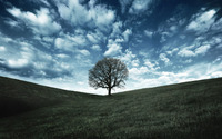 Lonely tree wallpaper 1920x1200 jpg