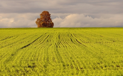 Lonesome autumn tree in the green field wallpaper