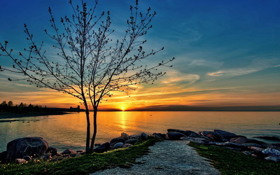 Lonesome tree at sunset wallpaper