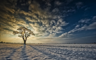 Lonesome tree in the snow wallpaper
